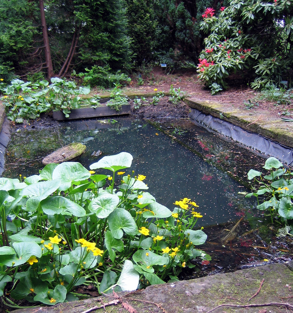 Gardengallery for Secret garden pool novaliches